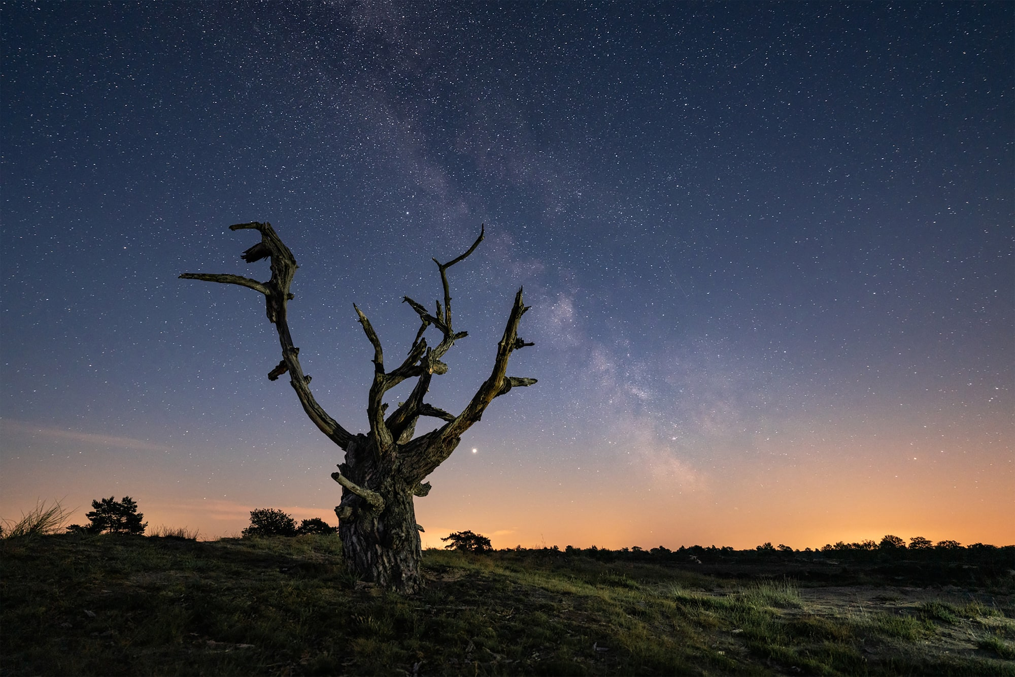 albert dros sony alpha 7RM4 the milky way visible in the sky above amsterdam with a dead tree in the foreground