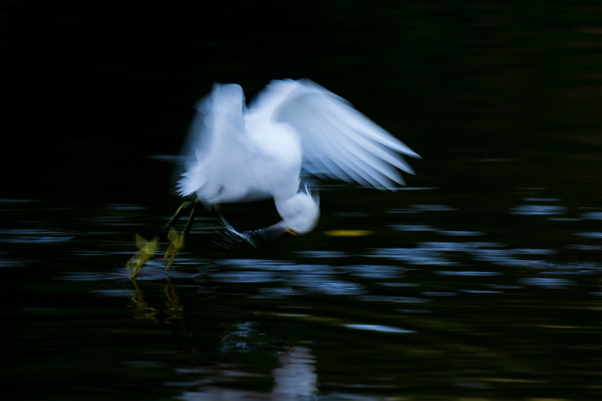 andreas-hemb-sony-alpha-9-a-bird-takes-off-from-a-lake-with-a-fish-in-its-beak