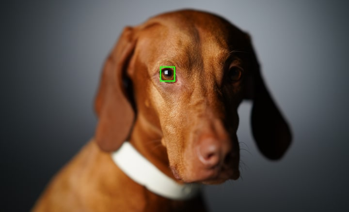 Bessere Fotos mit dem AF mit Augenerkennung für Tiere