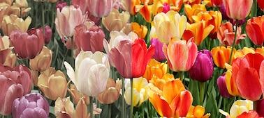 Bild, das natürliche Farben mit XR Triluminos PRO™ zeigt