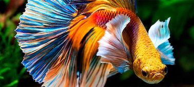 Bild eines Fischs mit Bilddetail in 4K