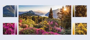Bilder von äußerst detailreichen Bergblumen mit XR HDR Remaster