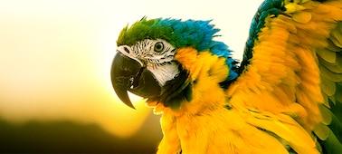 Bild eines Papageis mit Bilddetail in 4K