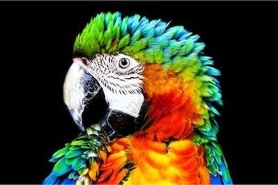 Detail eines Papageis auf OLED von Sony mit Pixel Contrast Booster