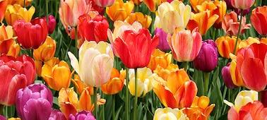 Detailansicht von Blumen mit subtilen Schattierungen und Nuancen in den Blütenblättern